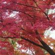 深まる秋に