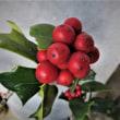 三陽メディアフラワーミュージアム クリスマスバージョン⑤ その他の花