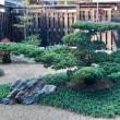 四天王寺と松。