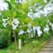 ジョロウグモ、ミゾソバ、季節外れのタマアジサイ(赤塚植物園)