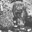 上信国境碓氷嶺熊野皇太太神社の石造物