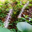古処山…ニシキキンカメムシの成虫に逢いたくて…