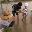 6/19 2年生と4年生が田植えをしました。