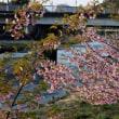 ヤマタケの蔵から二俣川原の春
