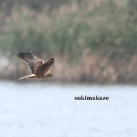 水面を飛ぶ 4