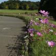 赤そば咲く北総花の丘公園
