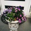 9月のお花はピンクパープル!