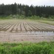 今年の田植えが佳境です