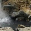 掛け流し温泉と循環式温泉