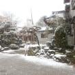 今シーズン初雪です。