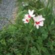 四月の庭の目立たない花たち