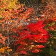 渓谷見事な紅葉 深山黄葉 秋たけなわ 定山渓温泉
