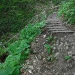 今季初の藻岩山は雨で途中断念!