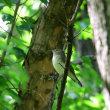 夏鳥キビタキが、去ってゆく途中に寄ってくれた。