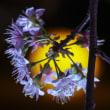 長居植物園夜間ライトアップ開園