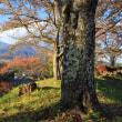 秋色のベンチ