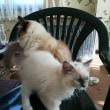 巣立つ子猫