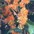 オレンジの  ジュータン切なき  秋の雨