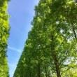 新緑の並木を抜けて♪