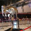 えひめ大恐竜博