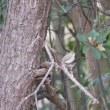 12月16日の鳥撮り散歩・・・