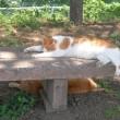 😸バテ猫…多摩川猫シリーズ