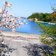 海と桜 今シーズンラストでした 2018年桜㉙