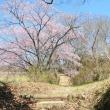 春の武蔵嵐山・・・中世の城郭・・・菅谷館跡に・・・ジョウビタキちゃんが