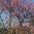 春を感じます