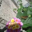 ヤマトシジミ&セセリ&花