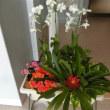 新しいブログへ引っ越しました・ http://blog.goo.ne.jp/tengaramonnへお越しください。