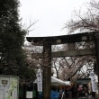 上野の桜はこんな感じ