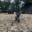 【伊豆高原】二泊目はウブドの森~♪♪