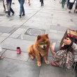 オーストリアの犬🇦🇹