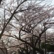 埼玉三郷さくら情報3月25日