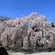 坂戸市の桜を満喫