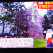 4/25 Jチャン 青森、弘前公園のの桜