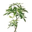 人気の人工観葉植物、パキラ