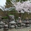 (2018年改訂版)京都の桜の名所勝手にランキングその2(計132ヶ所)