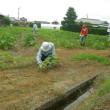 草刈り&草取り
