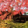 紅葉が色づき始めました:赤山禅院