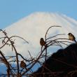 『富士と』 雀の学校