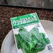 11月23日・割り箸でホウレンソウ播種!(動画付き)