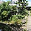 私の散歩学(23) 福田寺のユリ(2)