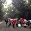 明治神宮の森を歩いて