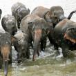 スリランカの警察官、ゾウに追いかけられ自動小銃紛失。