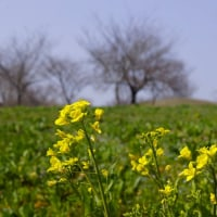 古墳の丘は 菜の花の丘