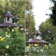 晩秋の北公園のバラの花たち 2