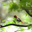 第四回東京多摩野鳥写真クラブ写真展開催中・・・(四日目)