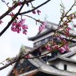 松江城のサクラ  2019.03.26